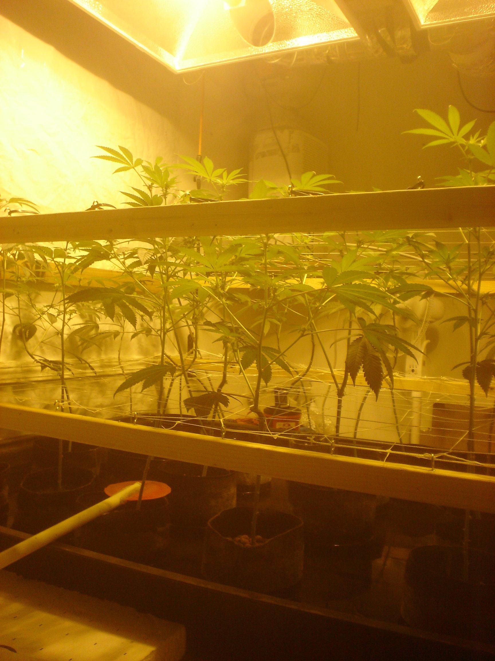 Plagron Light Mix 50  Pflanzerde vorgedüngt Grow Indoor Blumenerde Anzucht