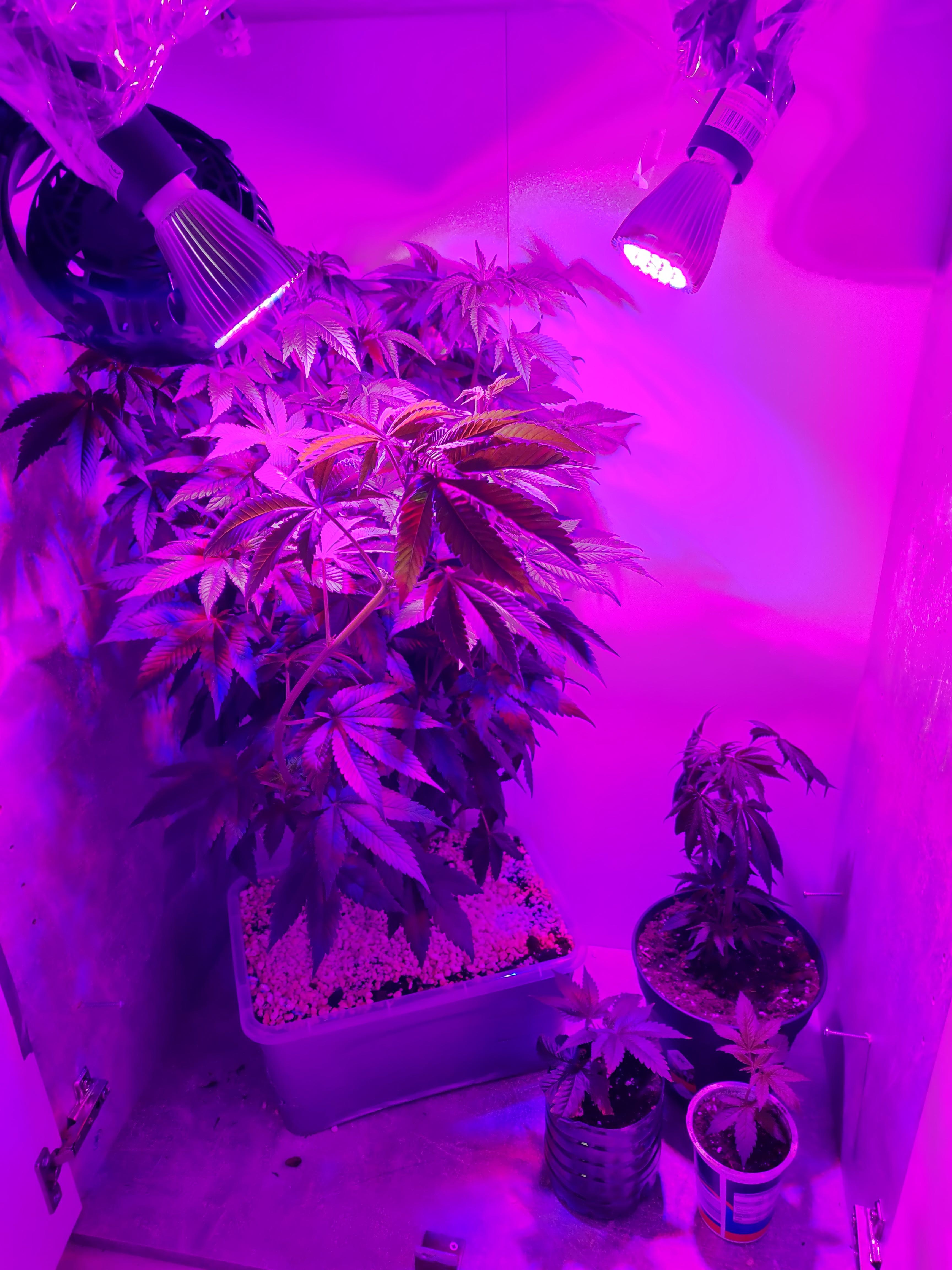 E27 LED Grow Light 30//50//80//100W Full Spectrum Wachsen Licht Pflanzenlampe Birne